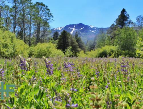 Wandering Highway 89: A Lake Tahoe Basin Family Hub